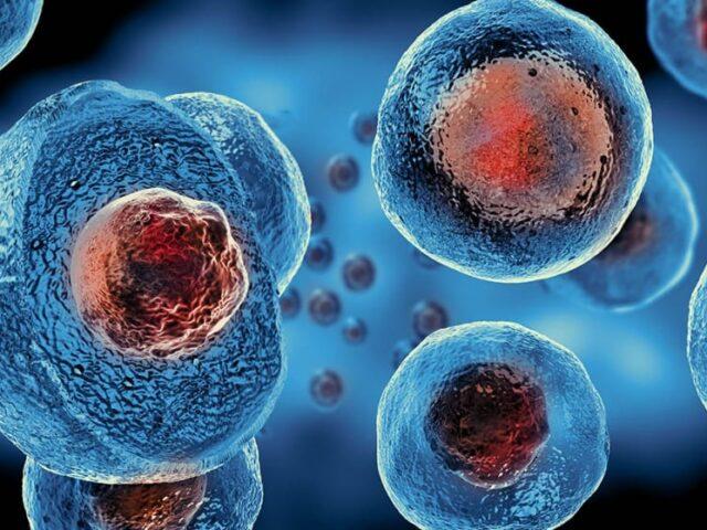 Вченим вдалось повернути зір сліпим мишам за допомогою клітин шкіри, які були перетворені на фоторецептори